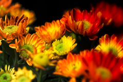 Vivid color of painterly glow of flower in the garden Royalty Free Stock Photo