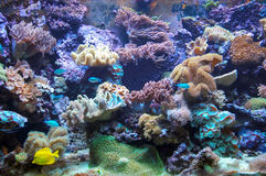 Vivid colored aquarium Royalty Free Stock Photo