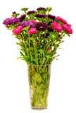 Vivid colored Callistephus chinensis flowers Royalty Free Stock Photos