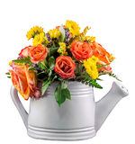 Vivid colored flowers, orange roses, in a white sprinkler, isolated, close up Royalty Free Stock Image