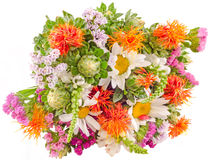 Vivid colored wild flowers Royalty Free Stock Image