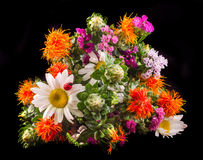 Vivid colored wild flowers, safflowers, daisys Stock Image