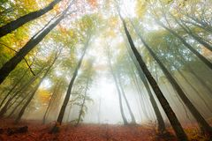 Vivid colors of autumn in the forest. Vibrant colors of autumn have paint this picturesque forest scenery royalty free stock photography