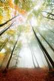 Vivid colors of autumn in the forest. Vibrant colors of autumn have paint this picturesque forest scenery stock photo