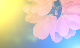 Vivid colors beautiful floral in soft style.For art texture or w Royalty Free Stock Image