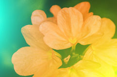 Vivid colors beautiful floral in soft style.For art texture or w Royalty Free Stock Photos