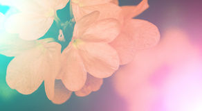 Vivid colors beautiful floral in soft style.For art texture or w Royalty Free Stock Images