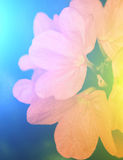 Vivid colors beautiful floral in soft style.For art texture or w Royalty Free Stock Photo