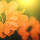 Vivid colors beautiful floral in soft style.For art texture or w Stock Image
