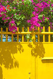 Vivid Colors Royalty Free Stock Images