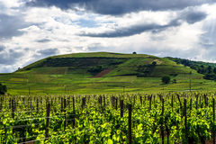 Vivid colors of vineyards Royalty Free Stock Photos