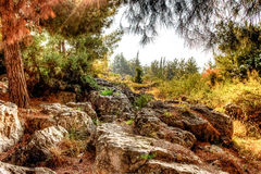 Vivid colors warm autumn Royalty Free Stock Photography