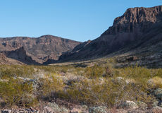 Vivid Desert landscape Stock Images