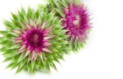 Vivid exotic flower Stock Images