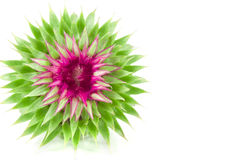 Vivid exotic flower Royalty Free Stock Photography