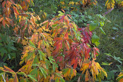 Vivid fall colors on plant. Stock Image