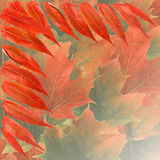 Vivid fall foliage background Royalty Free Stock Photo