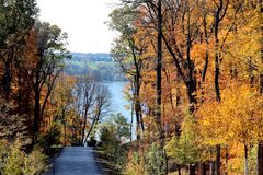 Vivid Fall Foliage. With bright yellow, orange and gold leaves on a country road in Wisconsin with Lake Geneva in the background Royalty Free Stock Photography