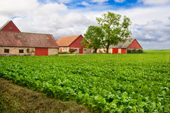 Vivid farmland Royalty Free Stock Image