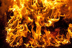 Vivid fire. Big fire of pine needles burning Stock Images