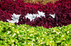 Vivid Flower Bed Stock Image