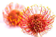 Vivid flower Stock Images