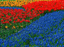 Vivid flowerbed. With all different kind of flowers Stock Photos