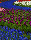 Vivid flowerbed Stock Photos
