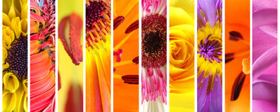Vivid flowers collection set Royalty Free Stock Photography