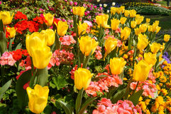 Vivid flowers Royalty Free Stock Images