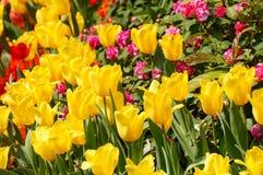 Vivid flowers Stock Image