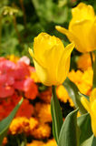Vivid flowers Royalty Free Stock Image