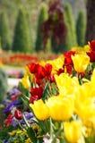 Vivid flowers Stock Photos