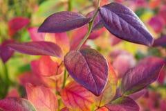 Vivid Foliage Stock Photos