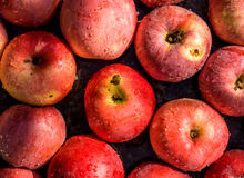 Vivid freshly picked red apples close up background Royalty Free Stock Photography
