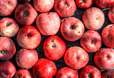 Vivid freshly picked red apples close up background Stock Photography