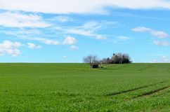 Vivid green agricultural field with distant trees stock photography