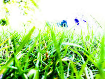 Vivid Green Grass. A background of green grass in high contrast Royalty Free Stock Photography