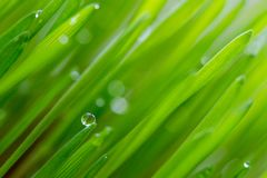 Pearls on grass