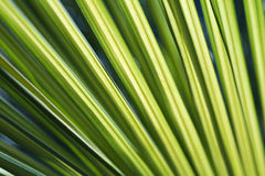 Vivid green palm fronds Stock Photo