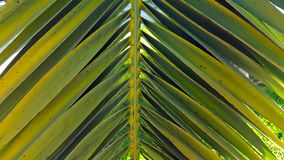 Vivid green palm leaf frond set against a clear blue sky. Yellow and green fronds Stock Images