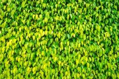 Vivid green wall Royalty Free Stock Image
