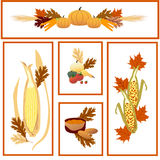 Vivid Harvest Collection Stock Image