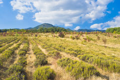 Vivid landscape in Crimean mountains Royalty Free Stock Image