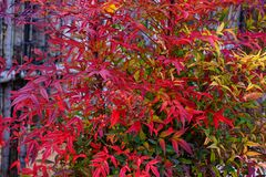 Vivid leaves Stock Photos