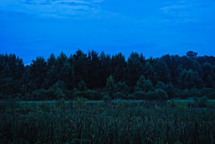 Vivid Marsh Sky and Forest Stock Image