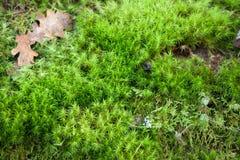 Vivid moss Stock Image