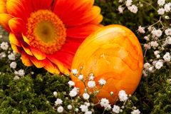 Vivid orange Easter egg with a gerbera and rose Royalty Free Stock Images