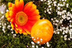 Vivid orange Easter egg with a gerbera and rose Stock Image