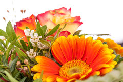 Vivid orange gerbera daisy in a bouquet Royalty Free Stock Images